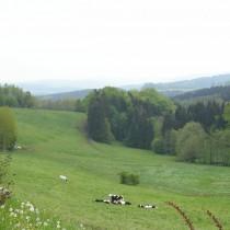 Hotel Waldesruh Blick ins Erzgebirge
